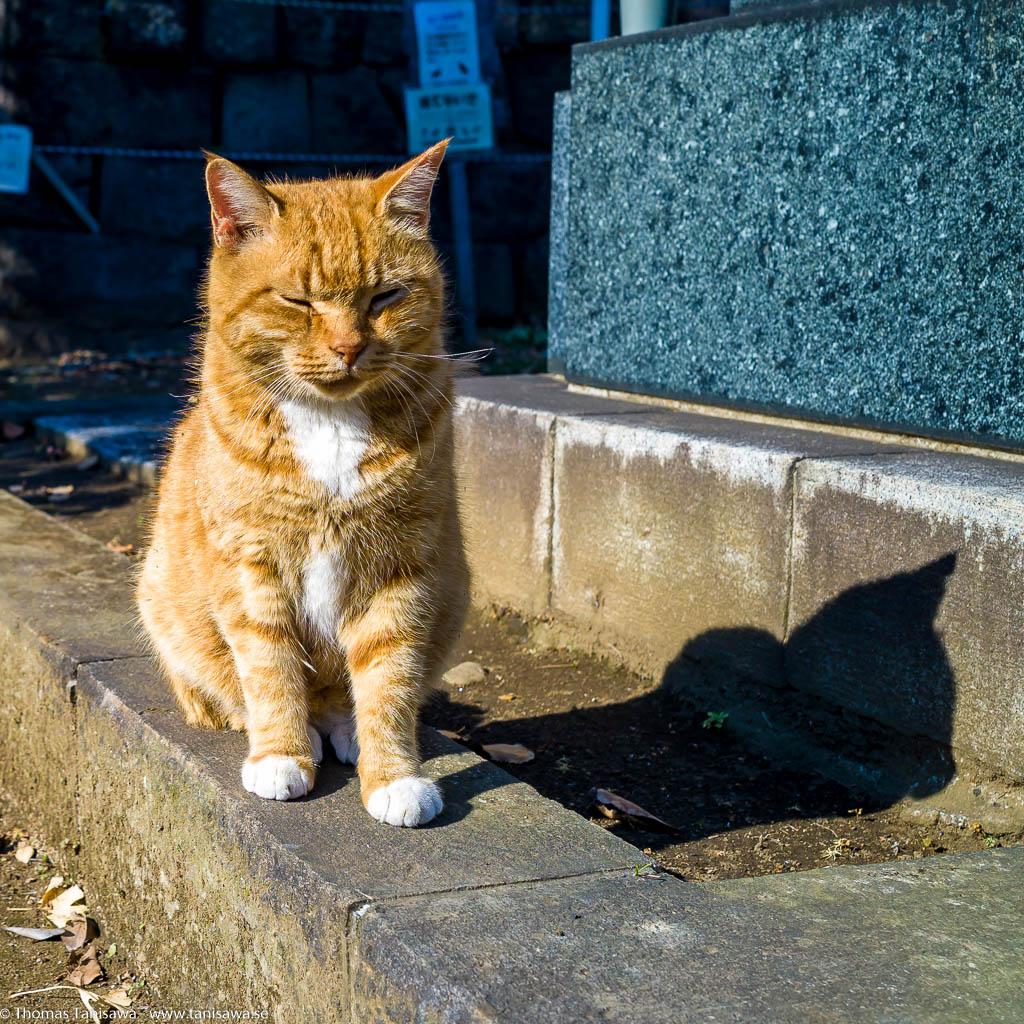 Yanaka cemetery cat